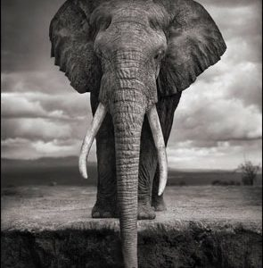 Hasted Kraeutler Opens Nick Brandt On This Earth, A Shadow Falls