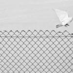 Marcin Ryczek's Elegant Philosophical Black and White Photographs